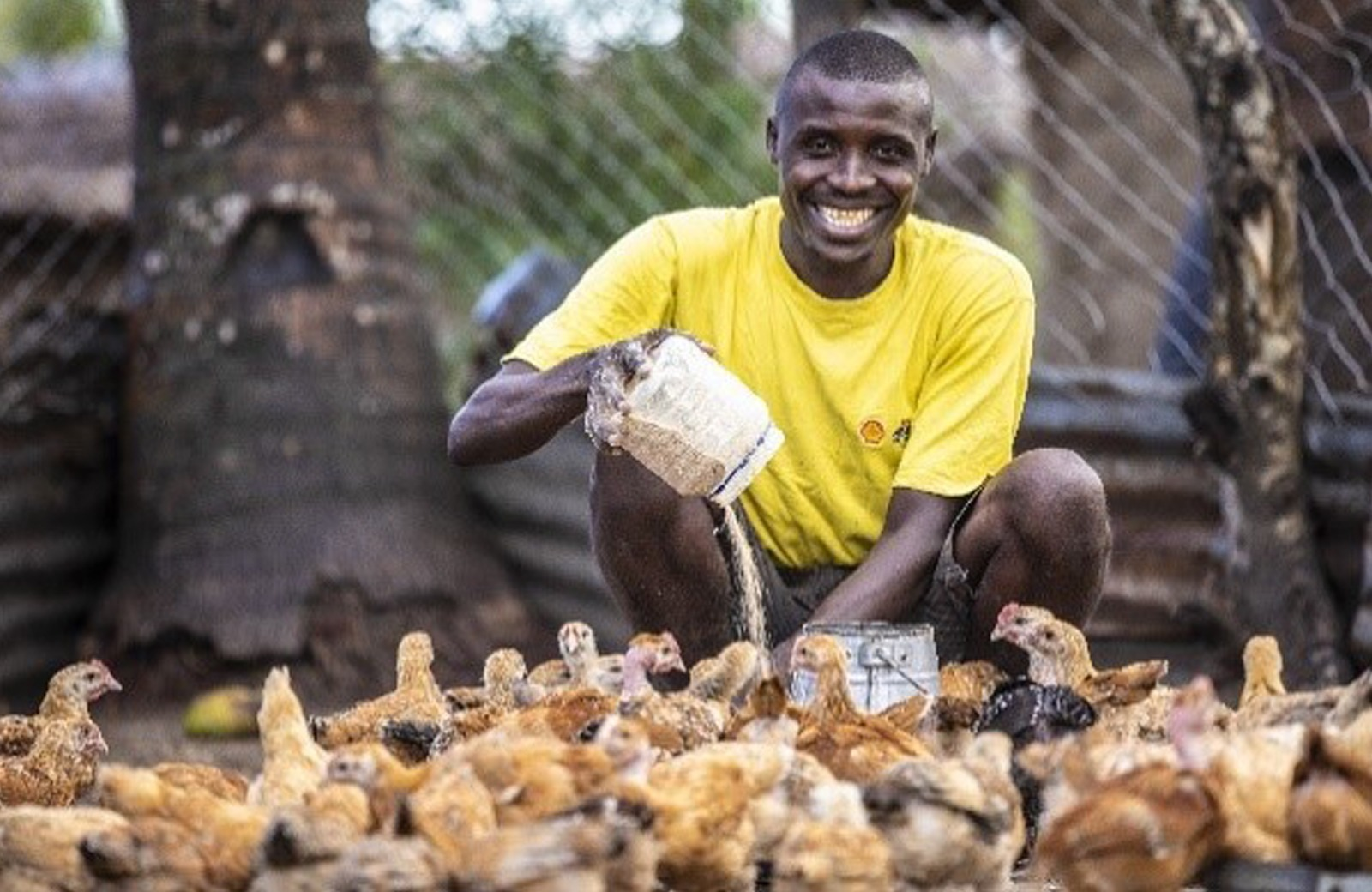 Omar, a member of the Umoja poultry group, feeding seeds to chicks